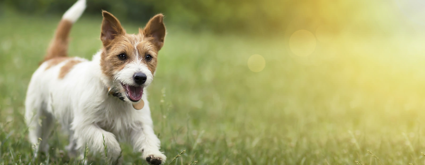lifestyle image of a dog running through the grass